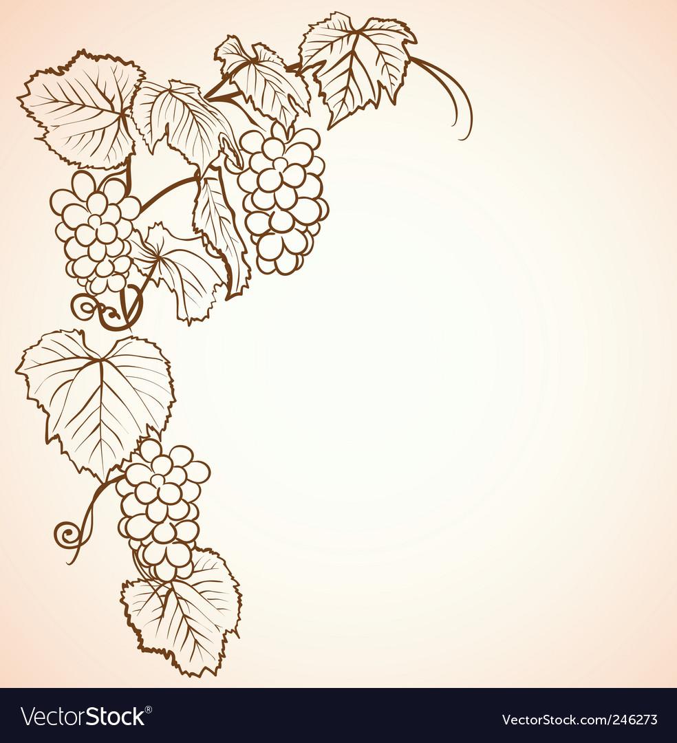 Vintage grape background vector image