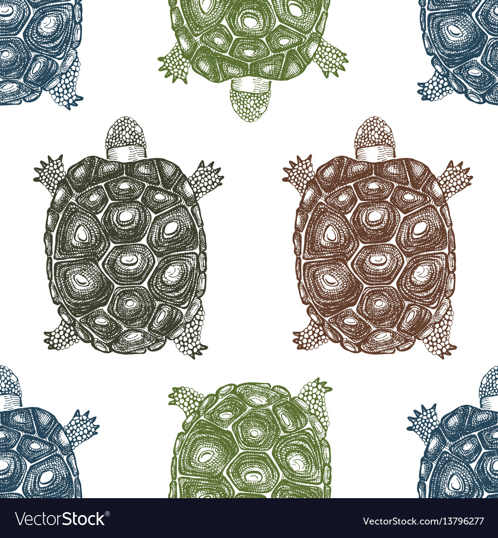 Seamless pattern with hand drawn turtles vector image