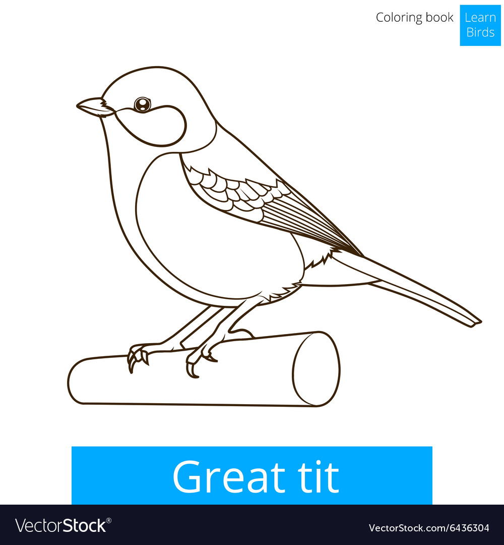 great tit learn birds coloring book vector image - Bird Coloring Book