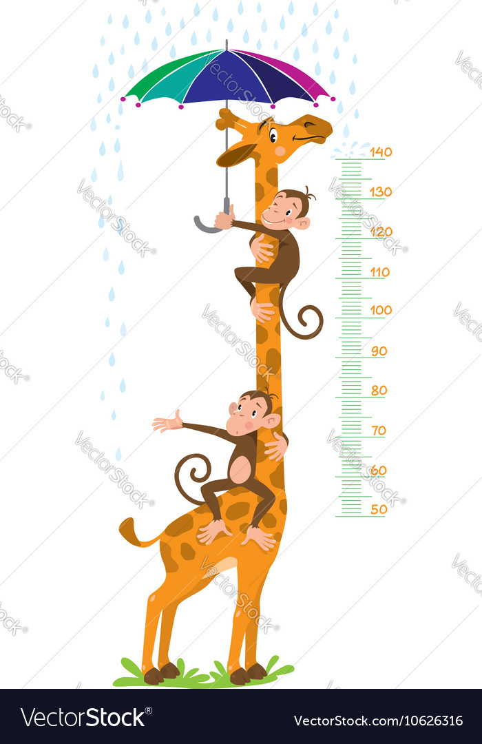 Giraffe and monkeys Meter wall or height chart vector image