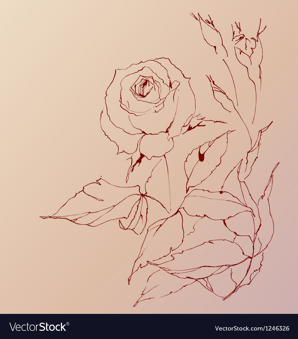 Sketch of a rose vector image