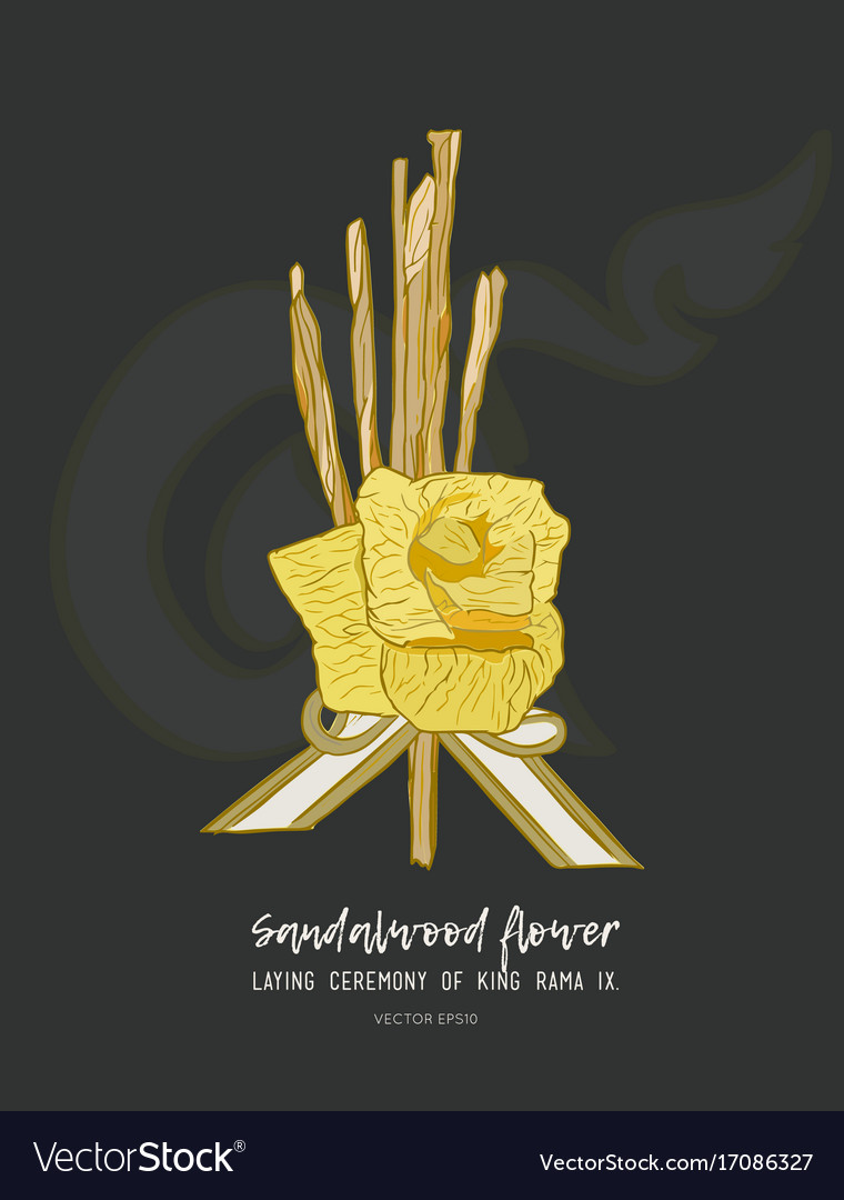 Sandalwood flower for king sketch vector image