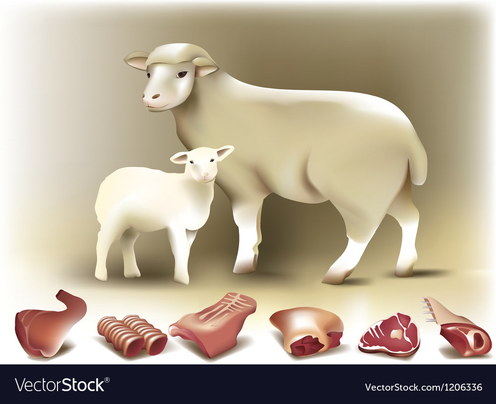 Sheep lamb and mutton vector image
