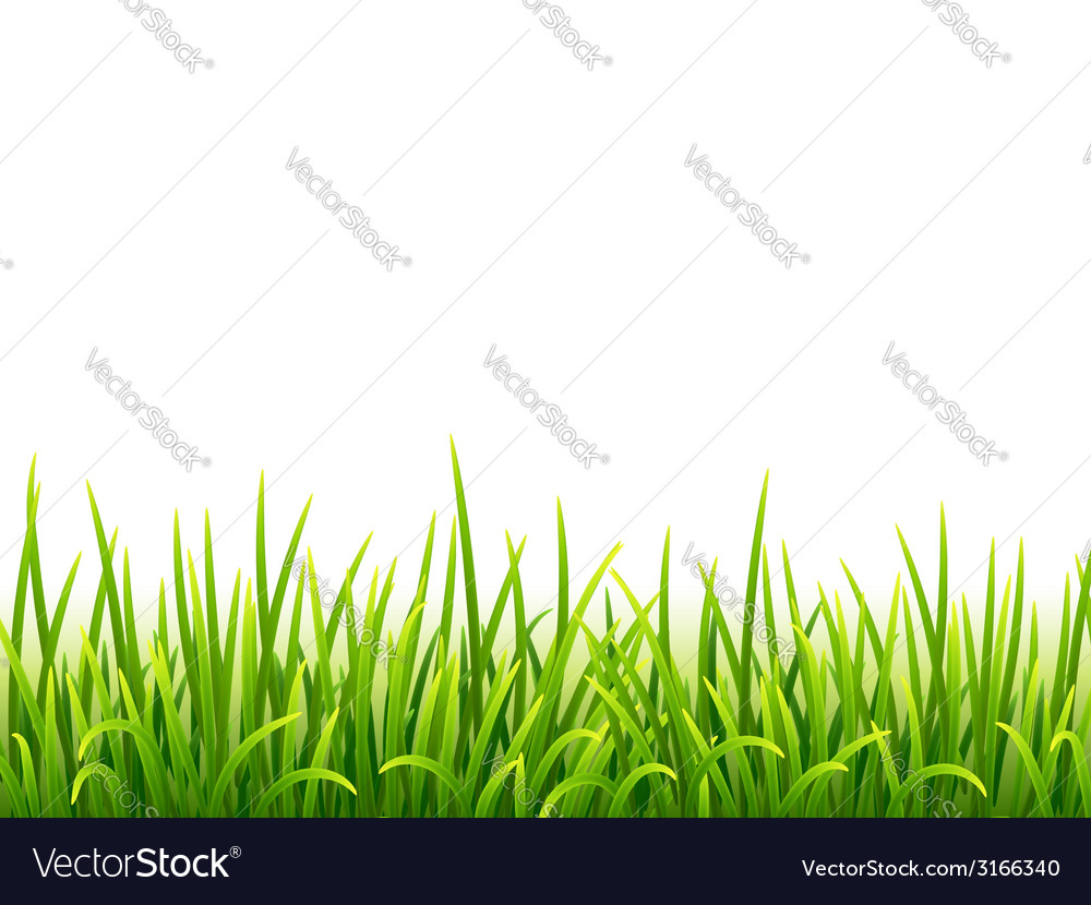 Green isolated grass on white background vector image