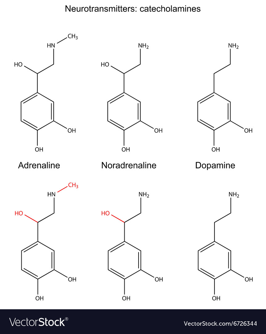 Structural chemical formulas of neurotransmitters vector image