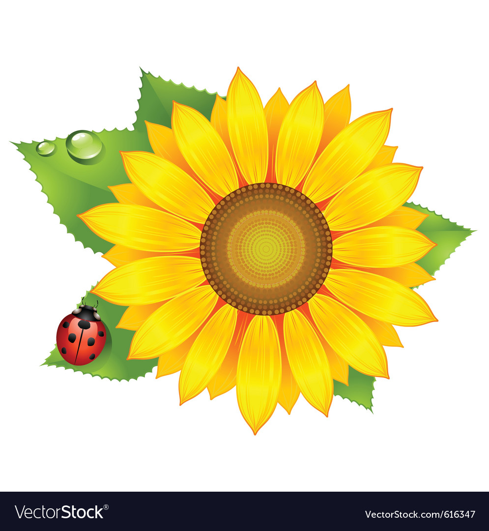 Sunflower with ladybird vector image