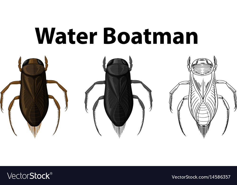 Doodle character for water boatman vector image