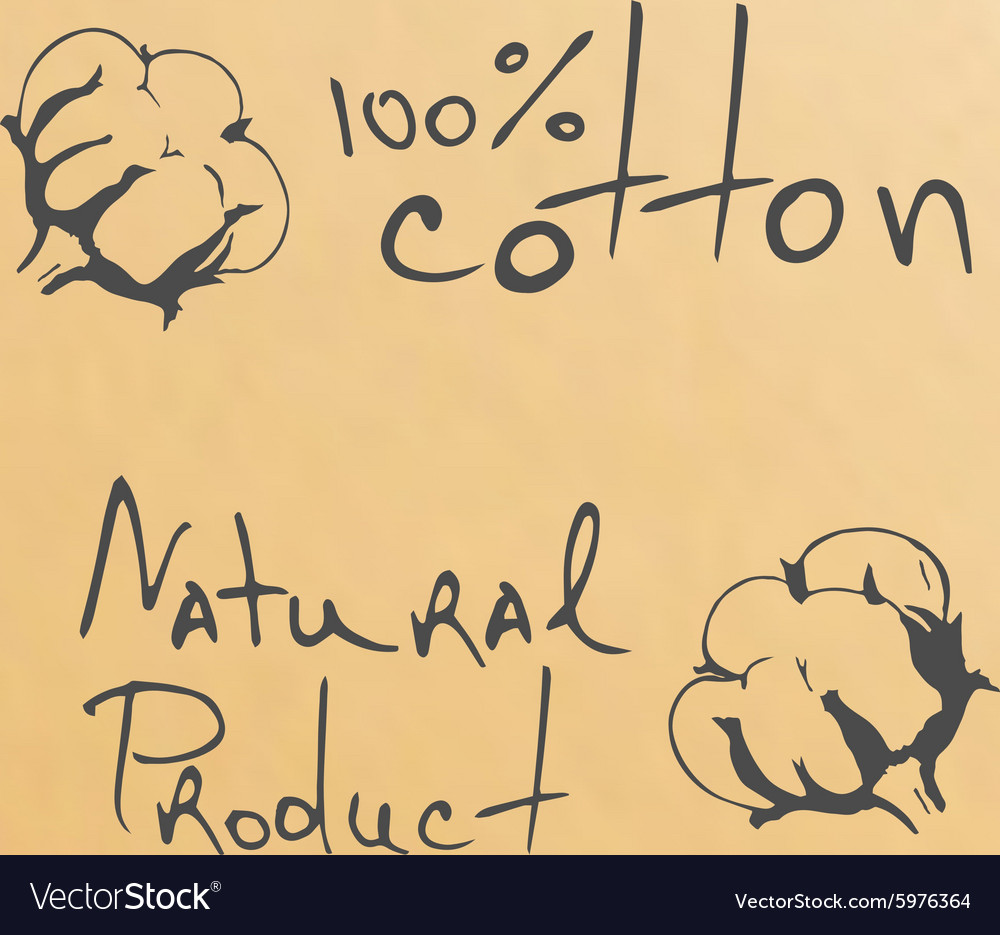 Natural products sketch cotton vector image