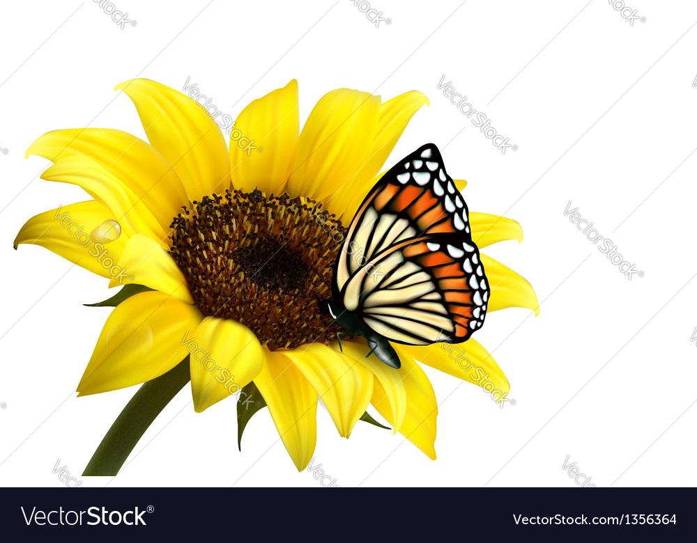 Nature summer sunflower with butterfly Royalty Free Vector