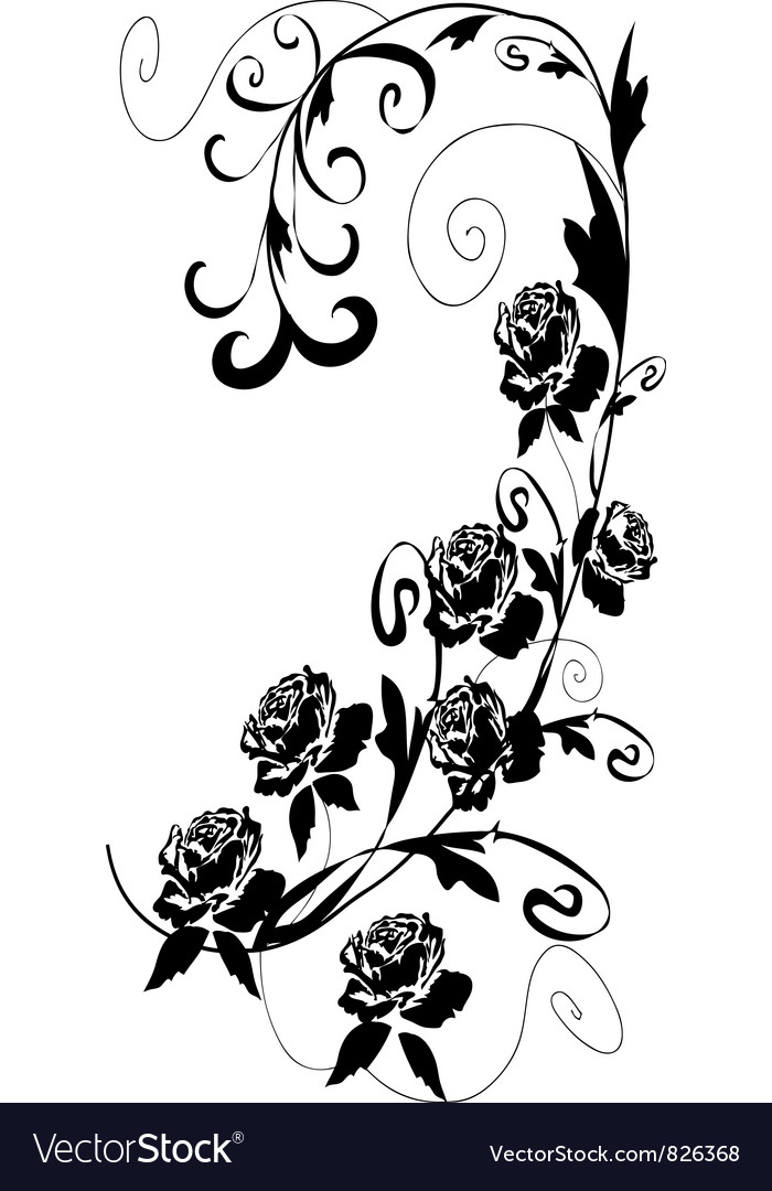 Black roses vector image