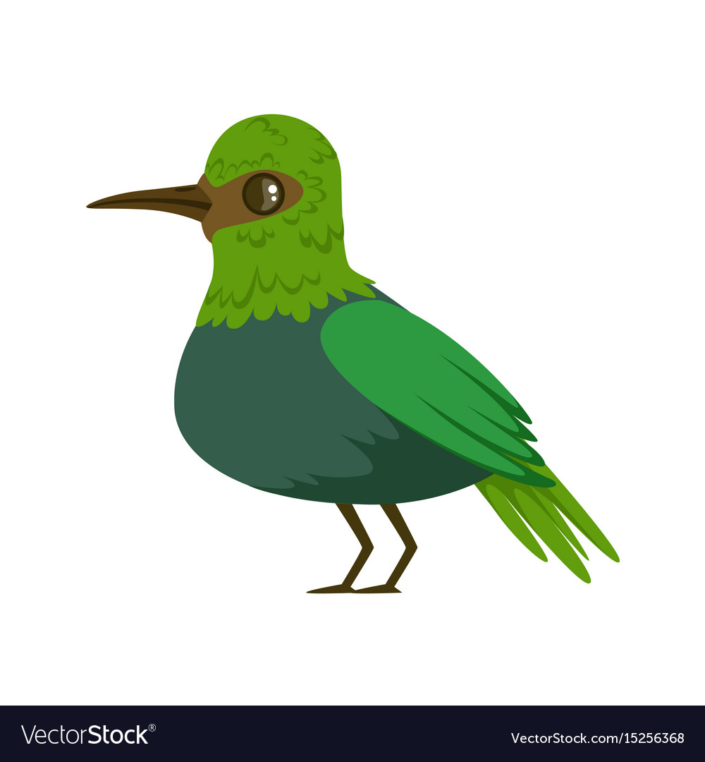Small bright green tropical bird colorful vector image