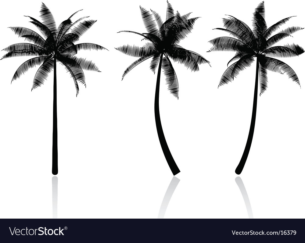 Palm tree graphics vector image