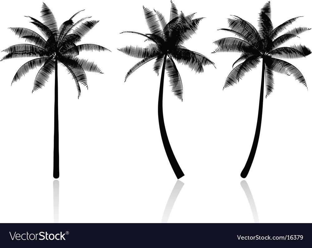 Palm tree graphics vector image