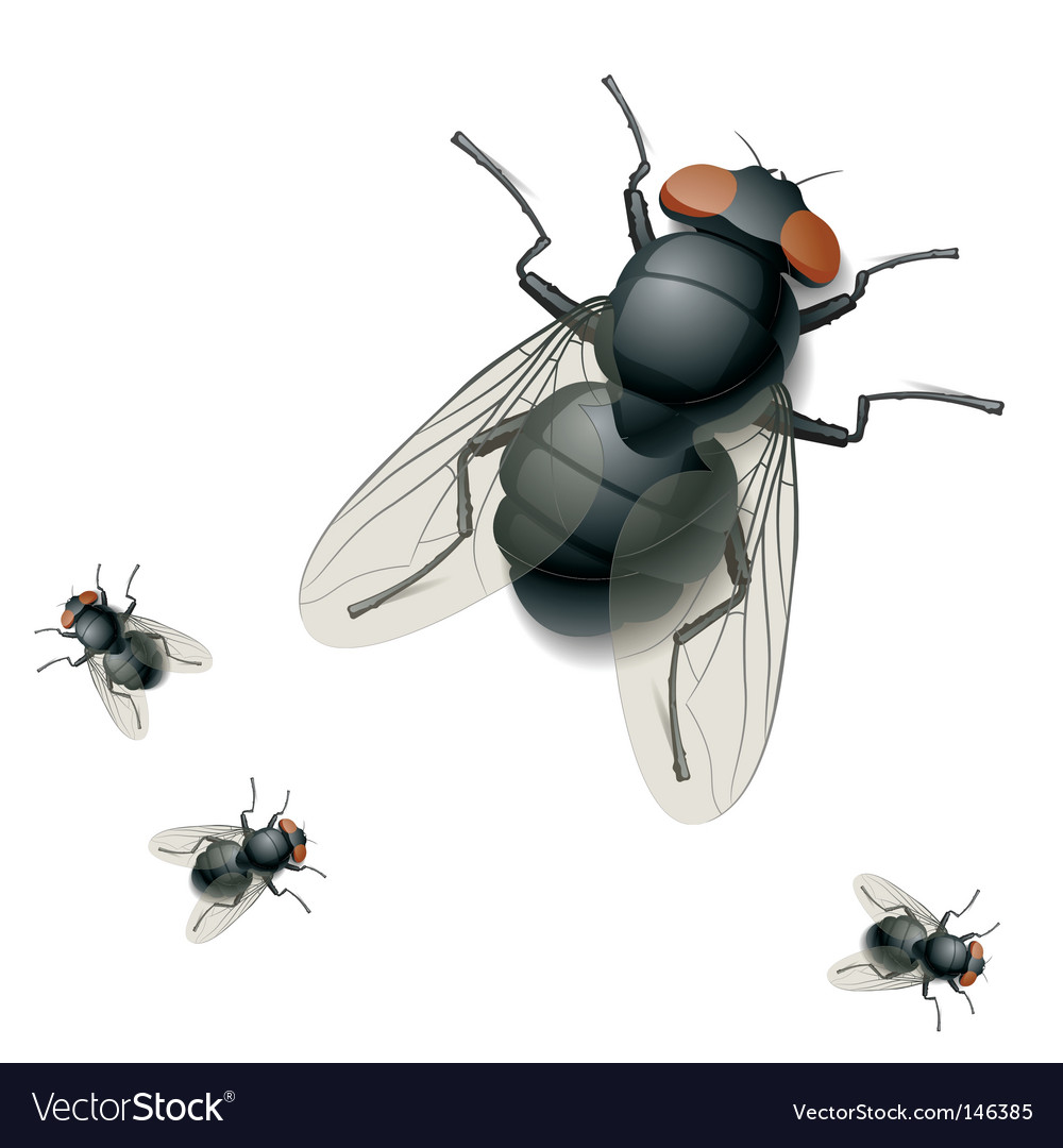 Housefly vector image
