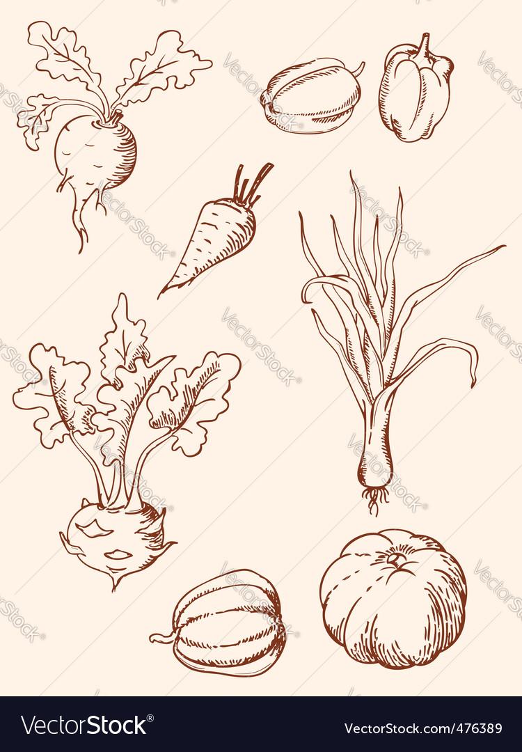 Hand drawn vintage vegetables vector image