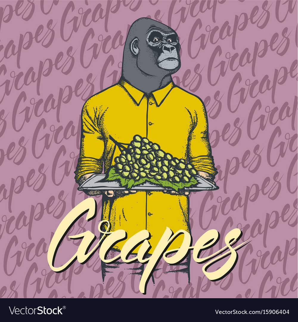 Gorilla with grapes vector image