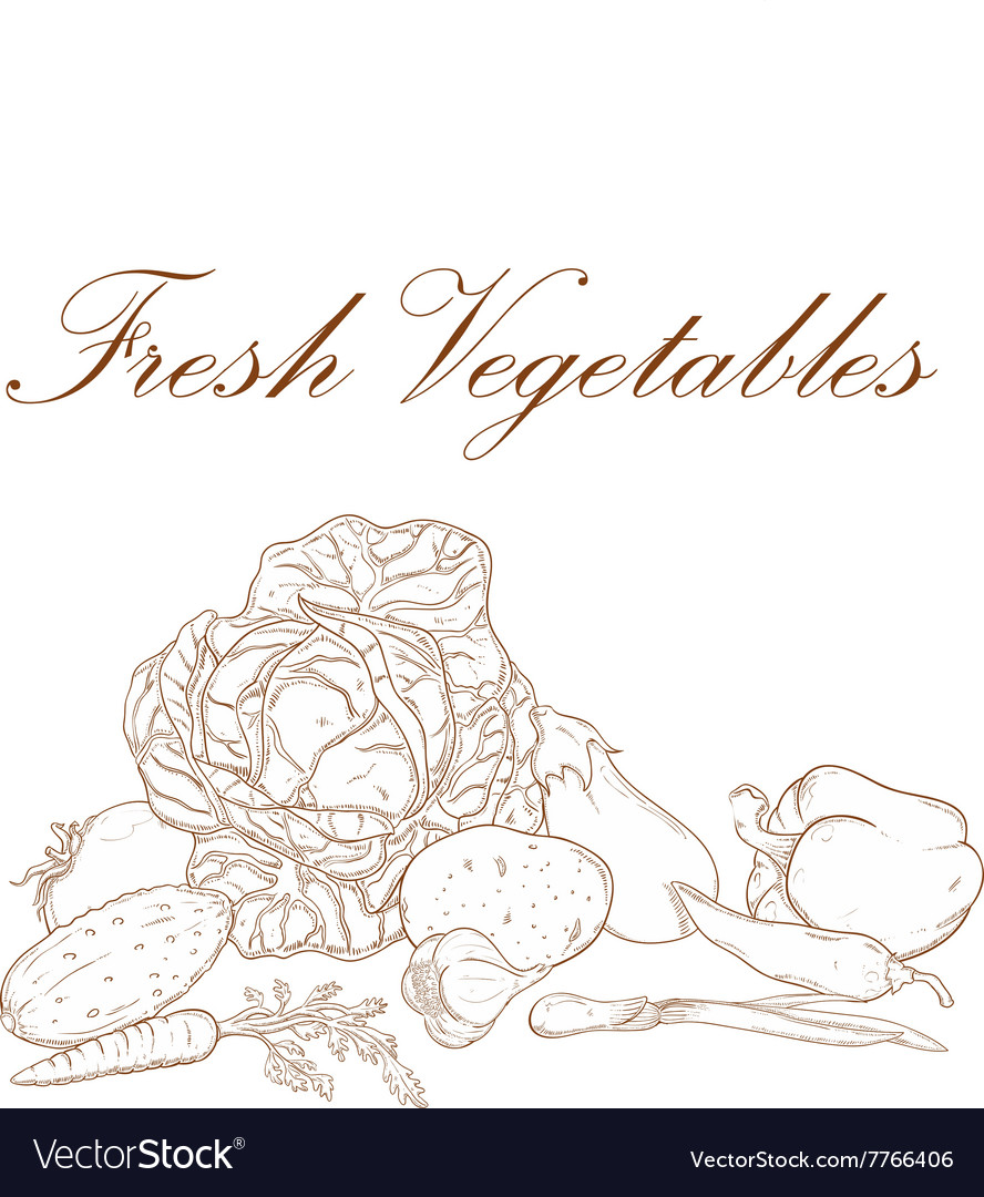 Fresh vegetables banner vector image