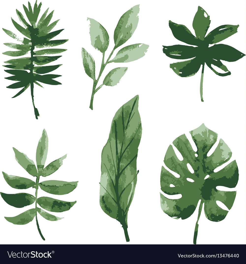 watercolor tropical leaves royalty free vector image palm vector freepik palm vector freepik