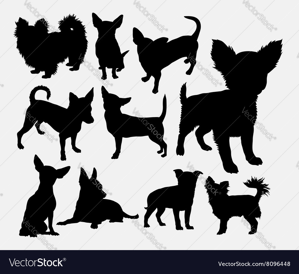 Chiwawa dog pet silhouette vector image
