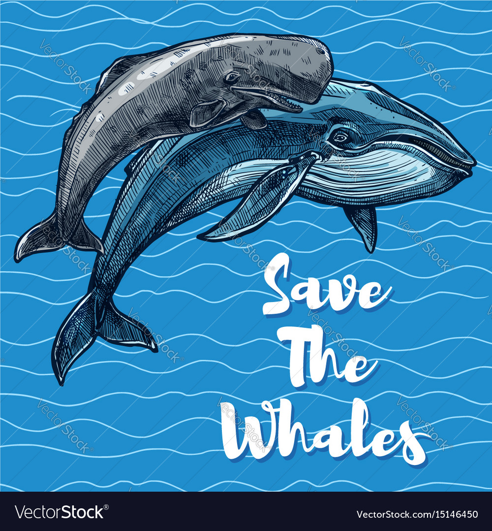 Poster for whales saving vector image