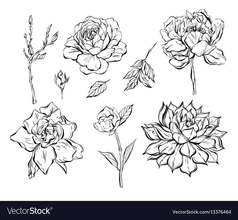 Hand drawn abstract graphic ink flowers vector image