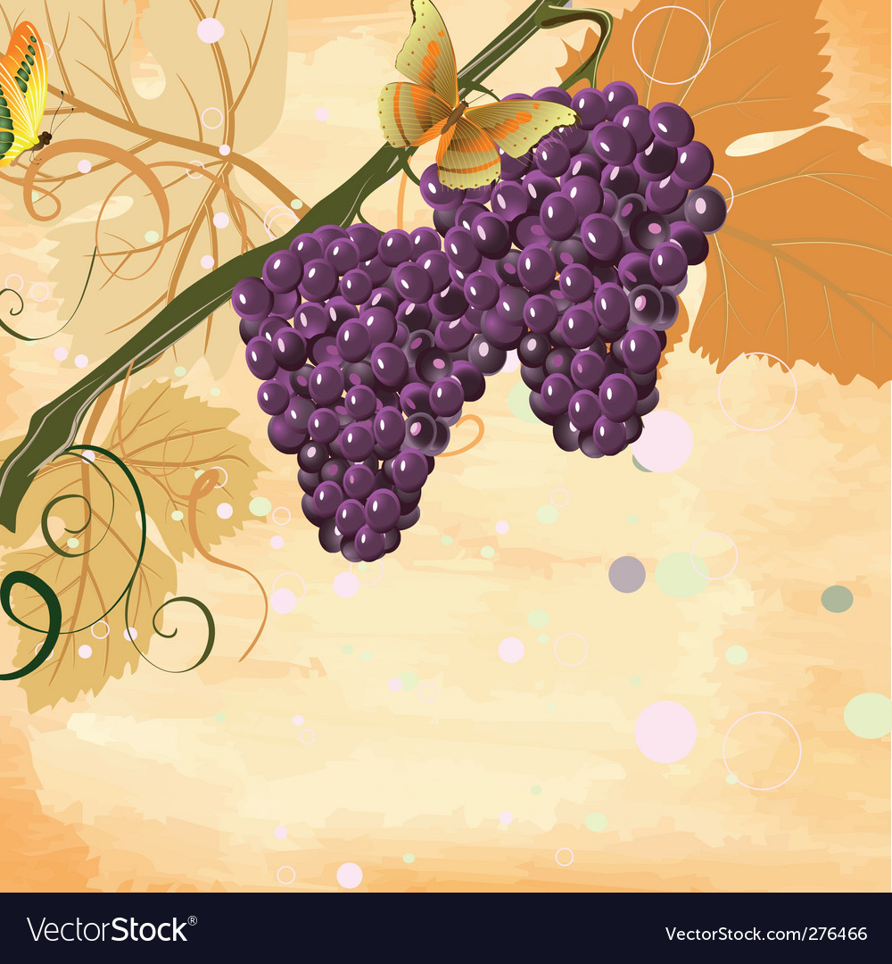 Bunches vector image