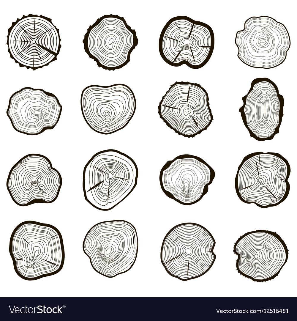 Tree Rings Set Saw Cut Trunk vector image