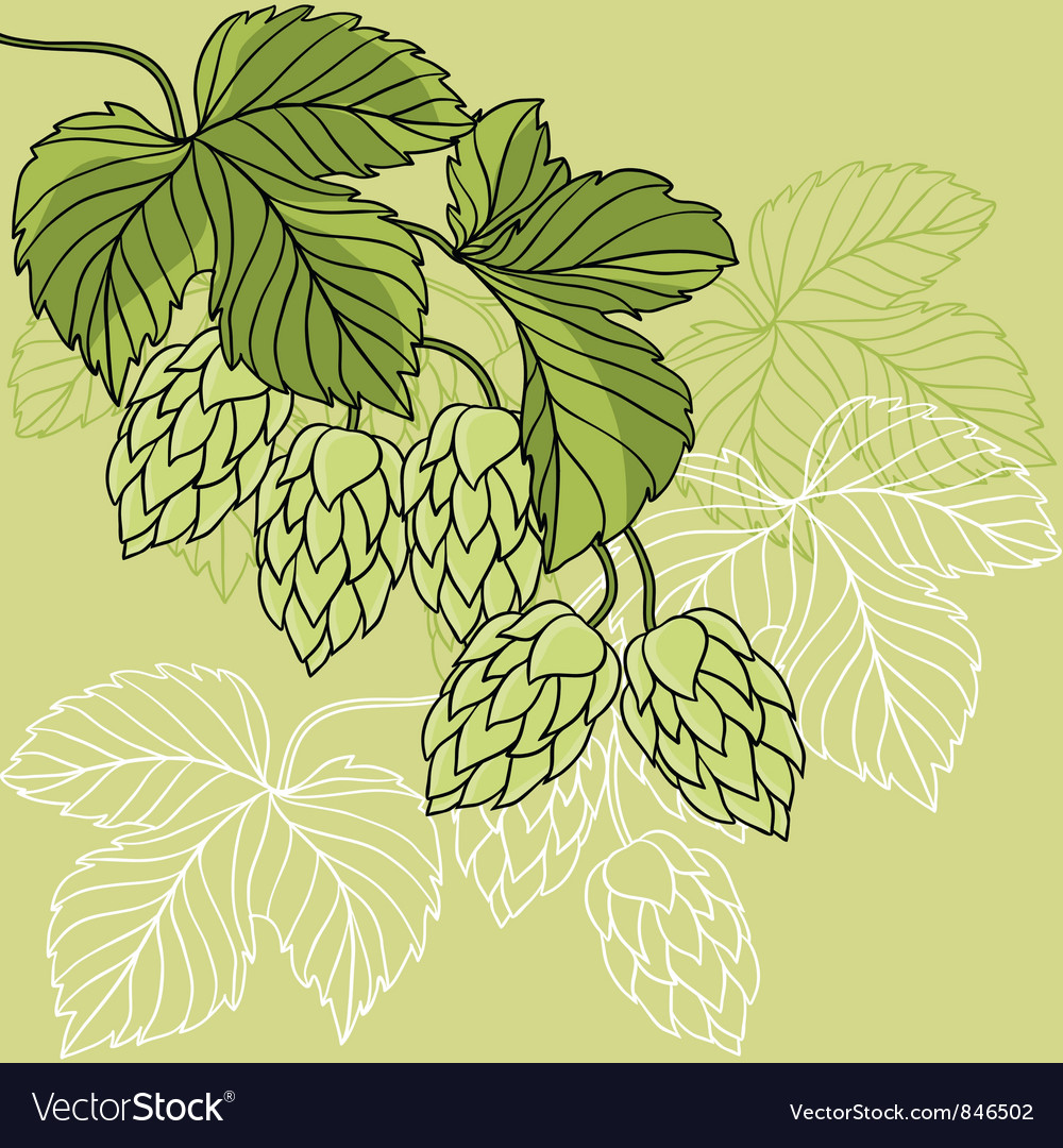 Hop Ornament On Green Grunge Background vector image