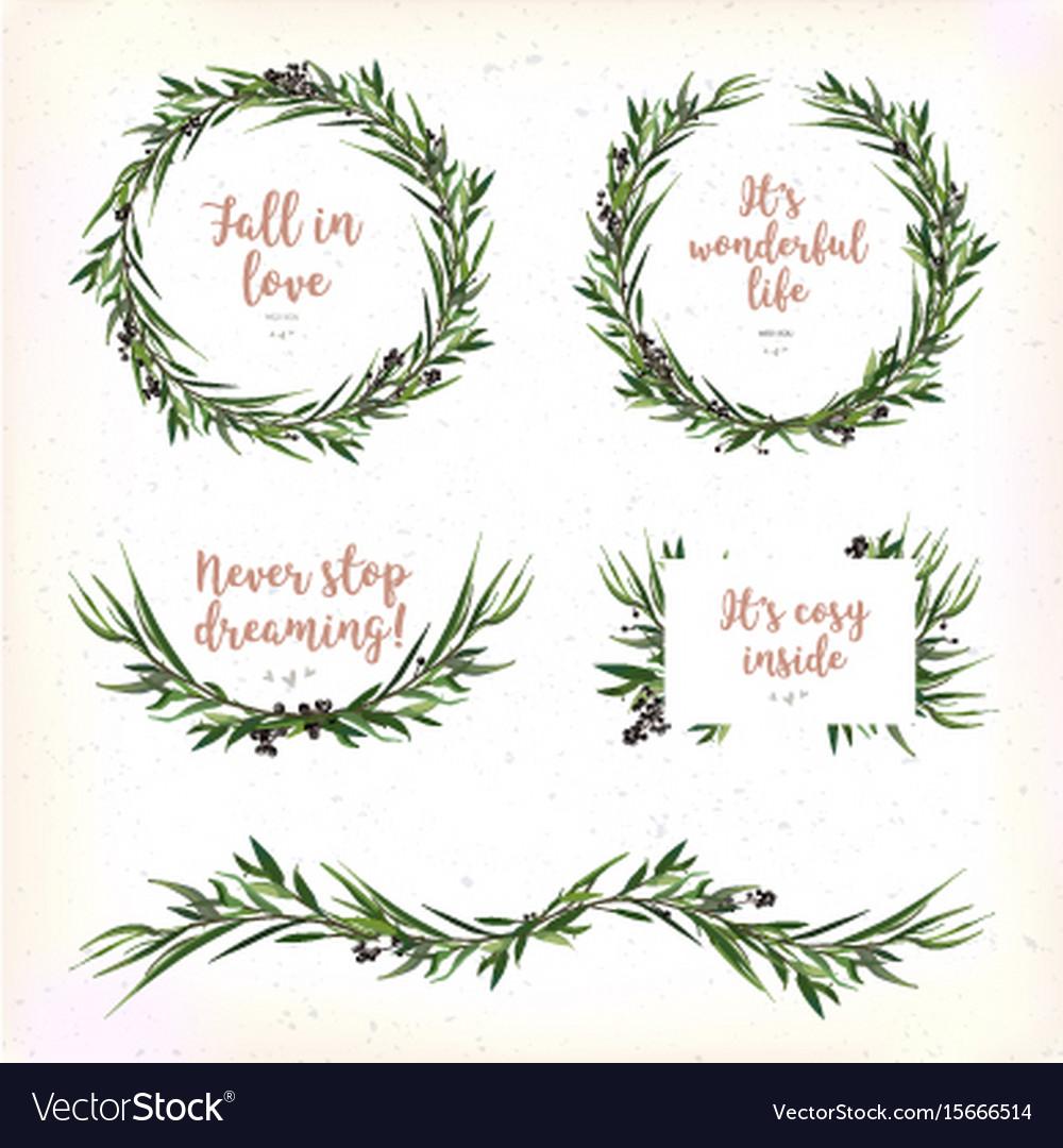 Eucalyptus leaves circle round green leaf wreath vector image