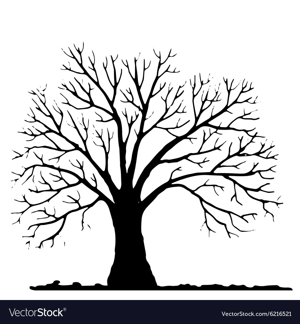 Tree without leaves silhouette Royalty Free Vector Image