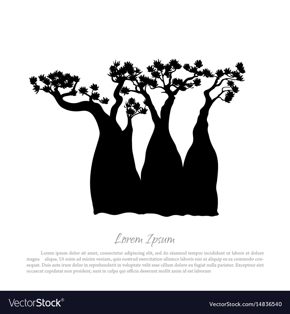 Black silhouette of a baobab on a white background vector image