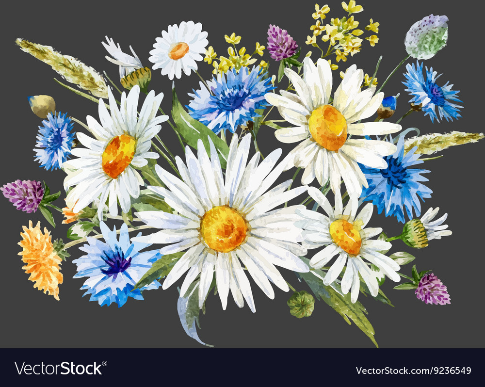 Watercolor wild flowers composition vector image