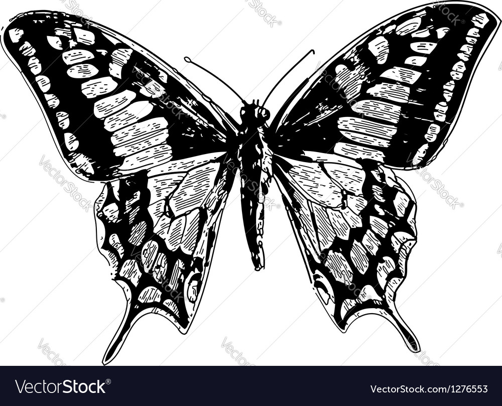 Swallowtail vintage engraving vector image