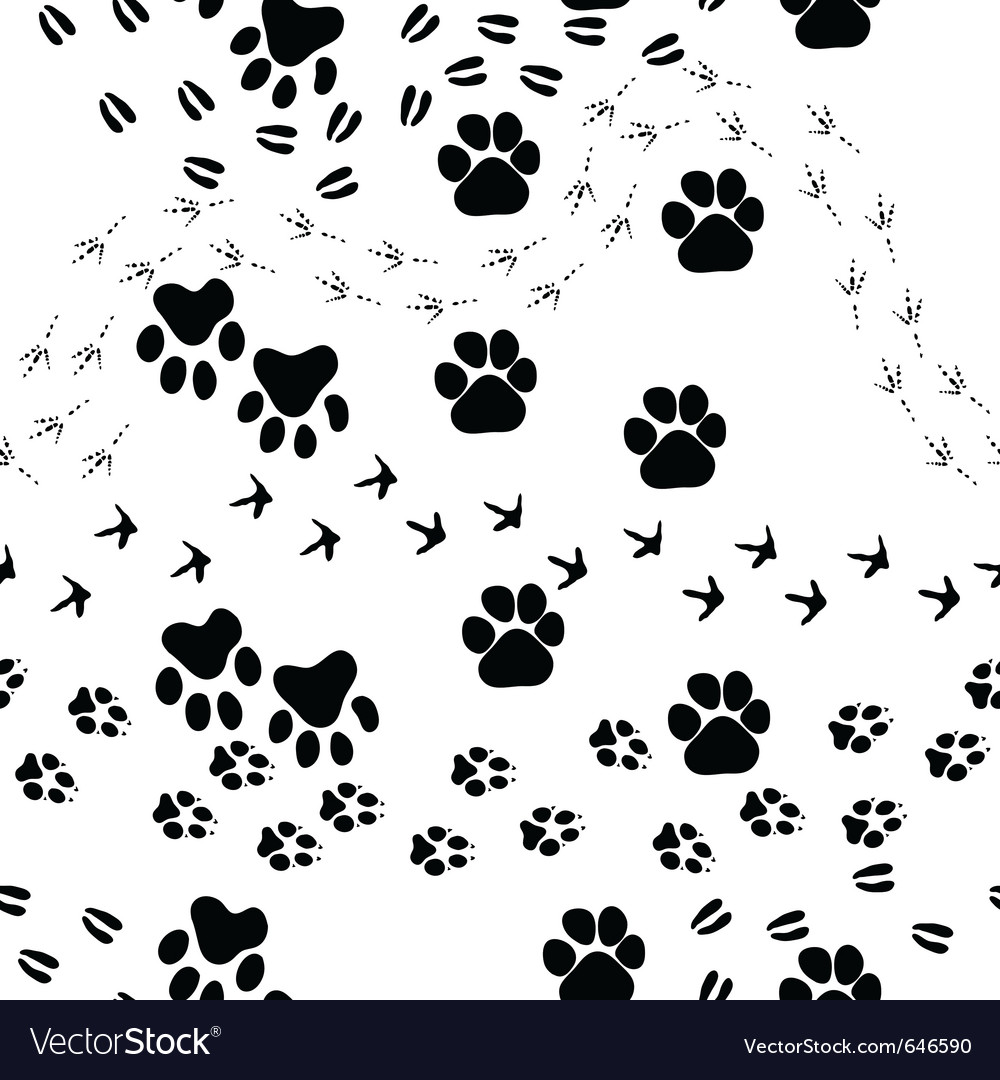 Animal footprint seamless pattern vector image