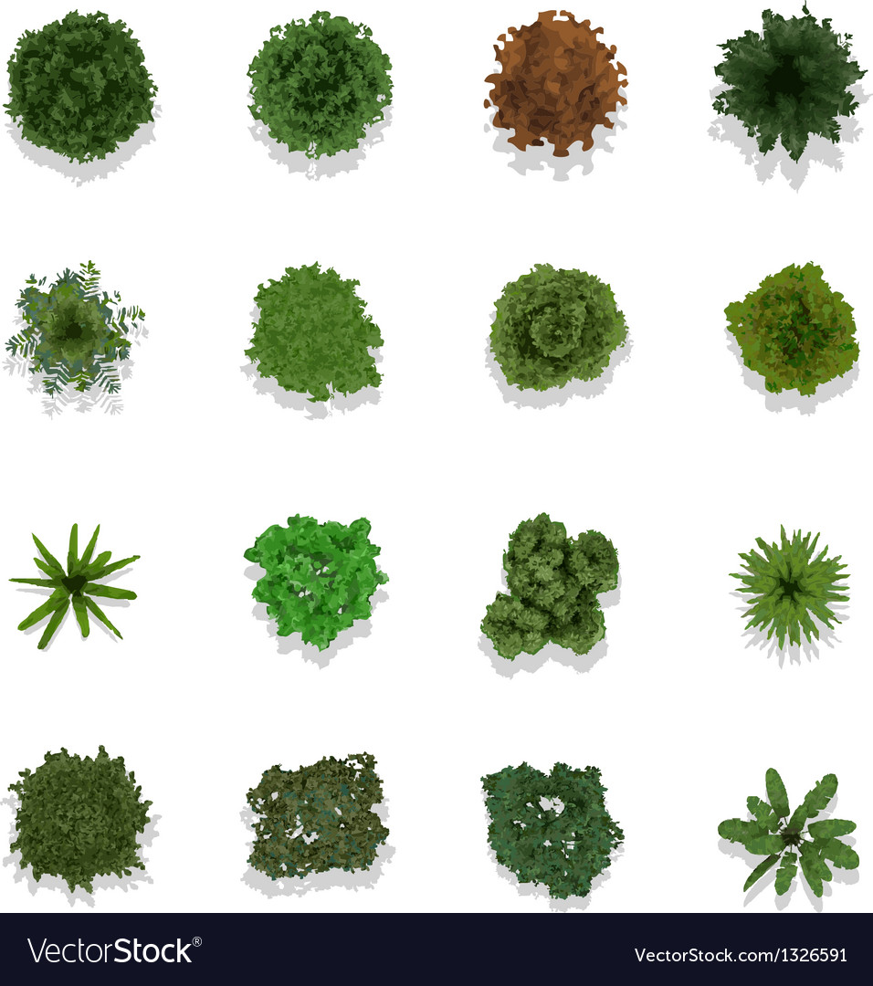 Trees top view for landscape vector image