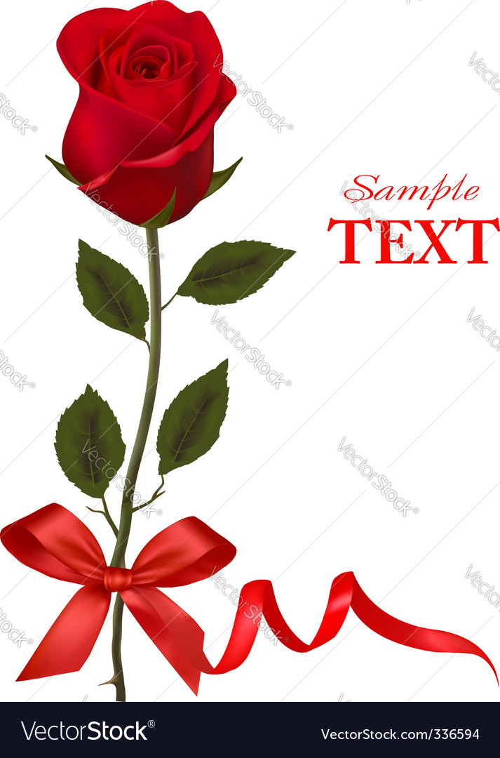 Beauty red rose with ribbons vector image