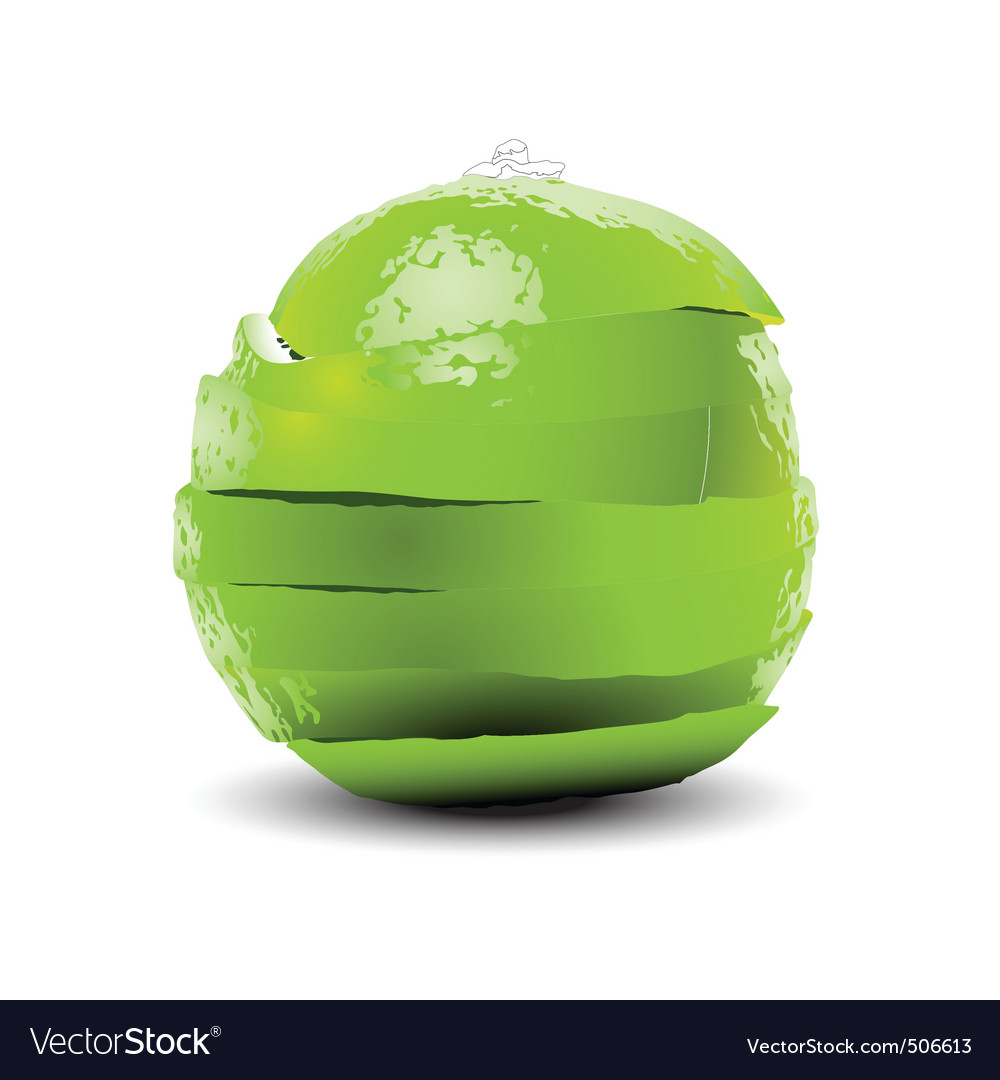 Sliced lime vector image