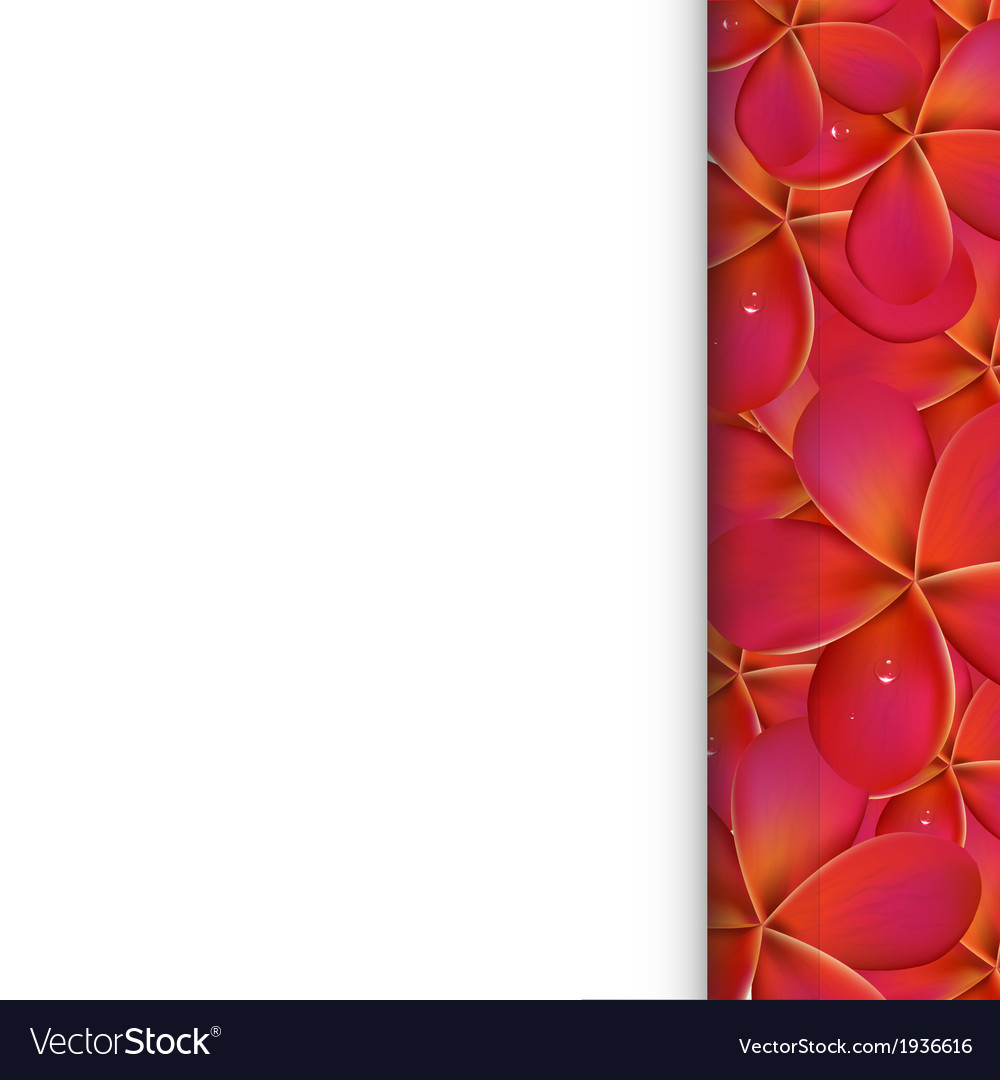 Paper With Pink Frangipani vector image