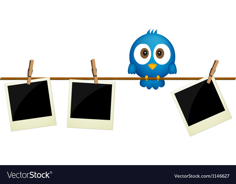 Three blank photos hanging on rope vector image