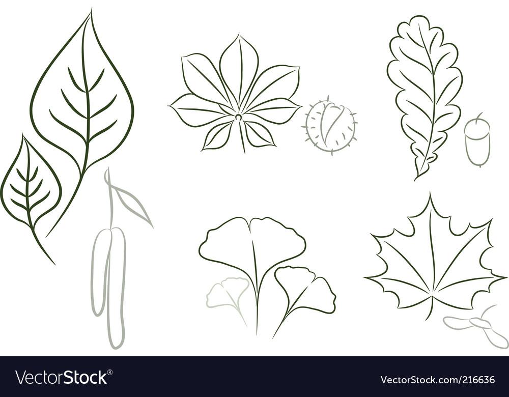Leaf sketch vector image
