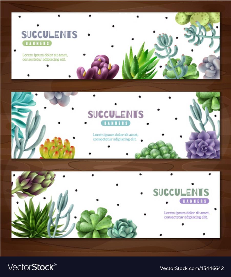 Succulent plants horizontal banners vector image