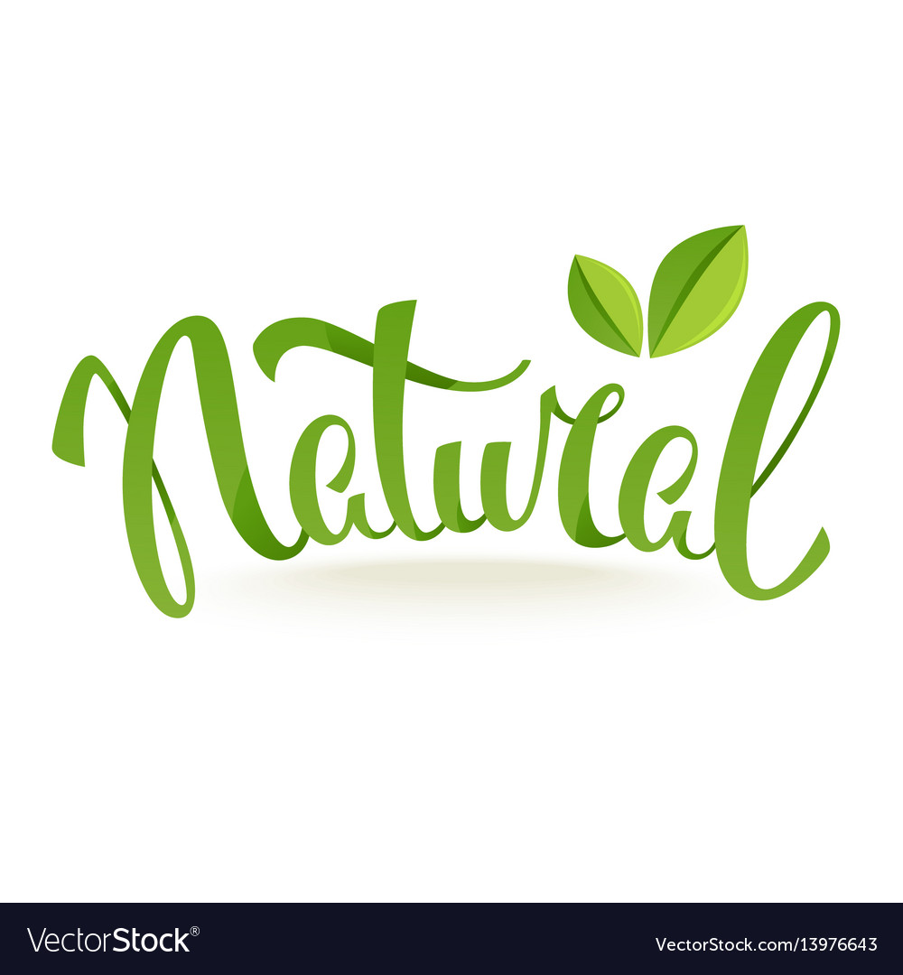 Natural and organic green glossy leaves and vector image