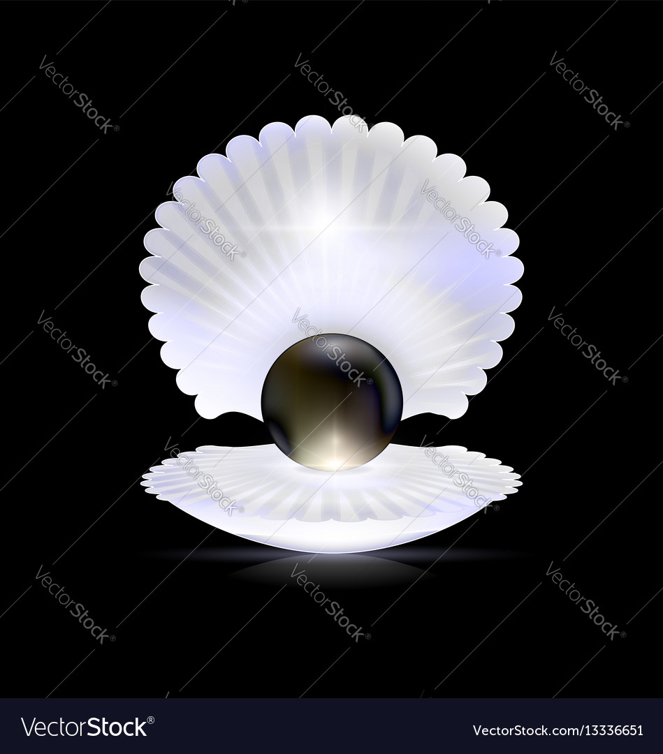 Dark black pearl and shell vector image