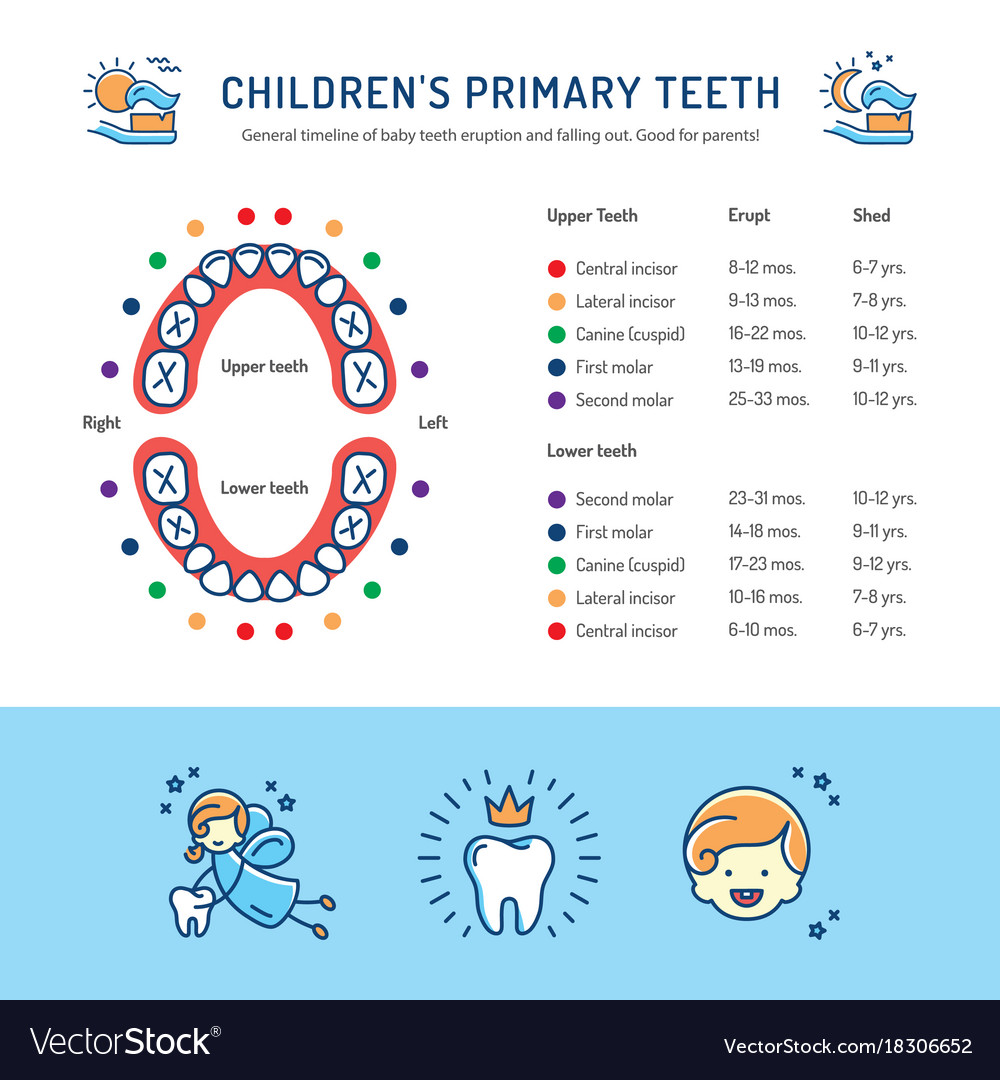 Growth chart of baby image collections free any chart examples infant teeth growth chart choice image free any chart examples childrens primary teeth schedule of baby nvjuhfo Images