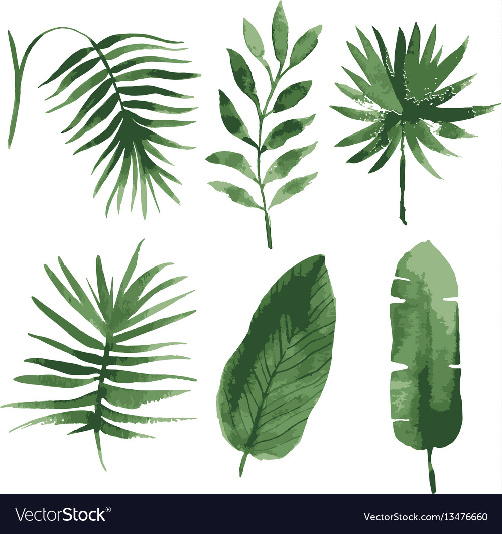 watercolor tropical leaves royalty free vector image