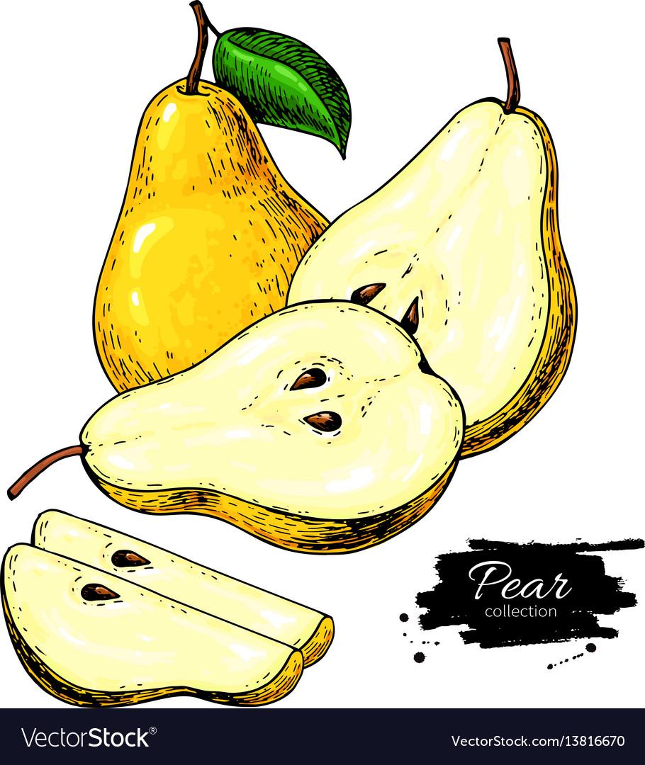 Pear drawing isolated hand drawn pear and vector image