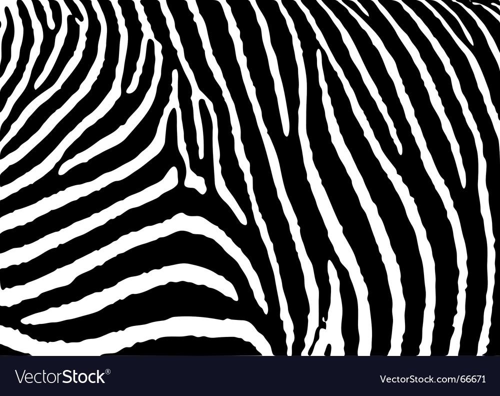 Zebra pattern large Vector Image