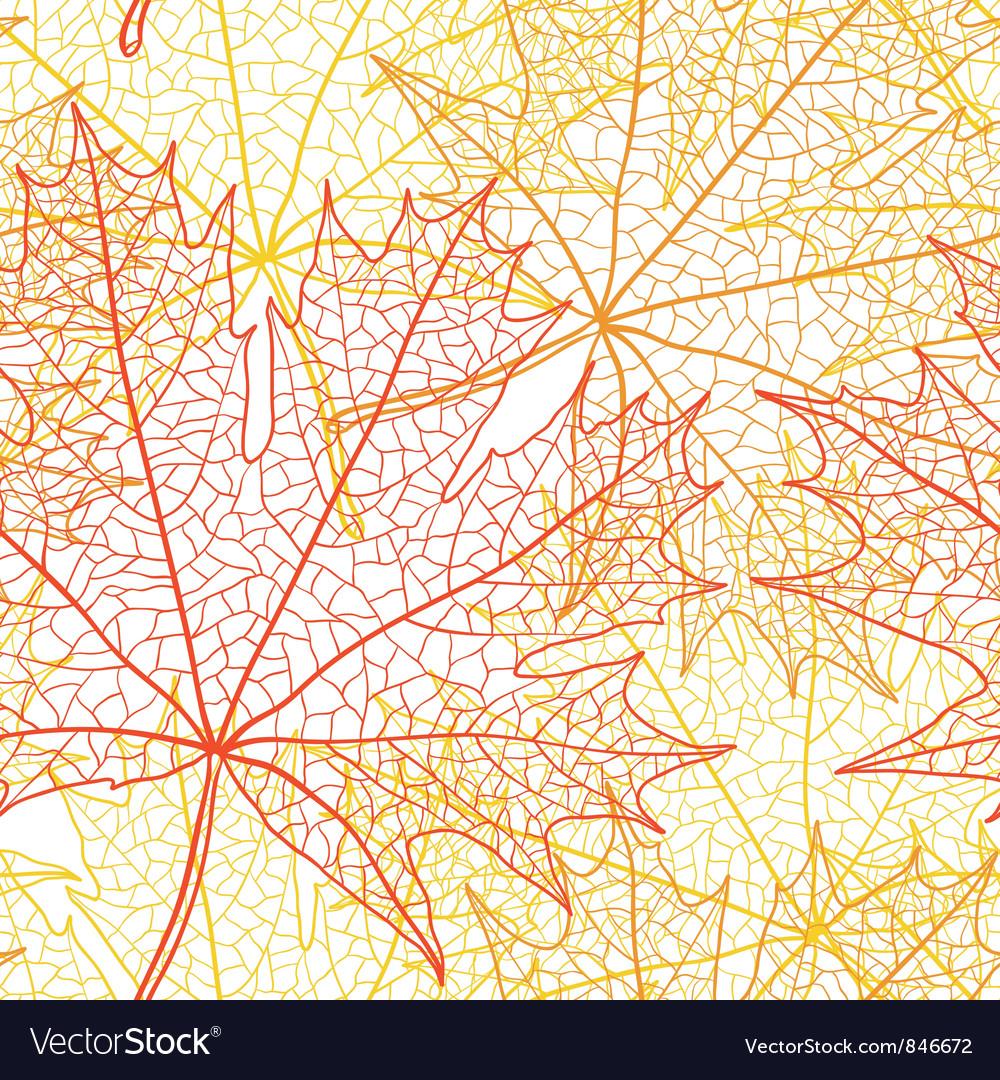 Autumn macro leaf of maple bacground Vector Image