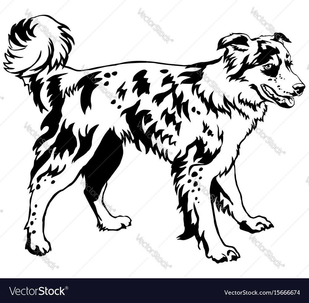 Decorative standing portrait of dog border collie vector image
