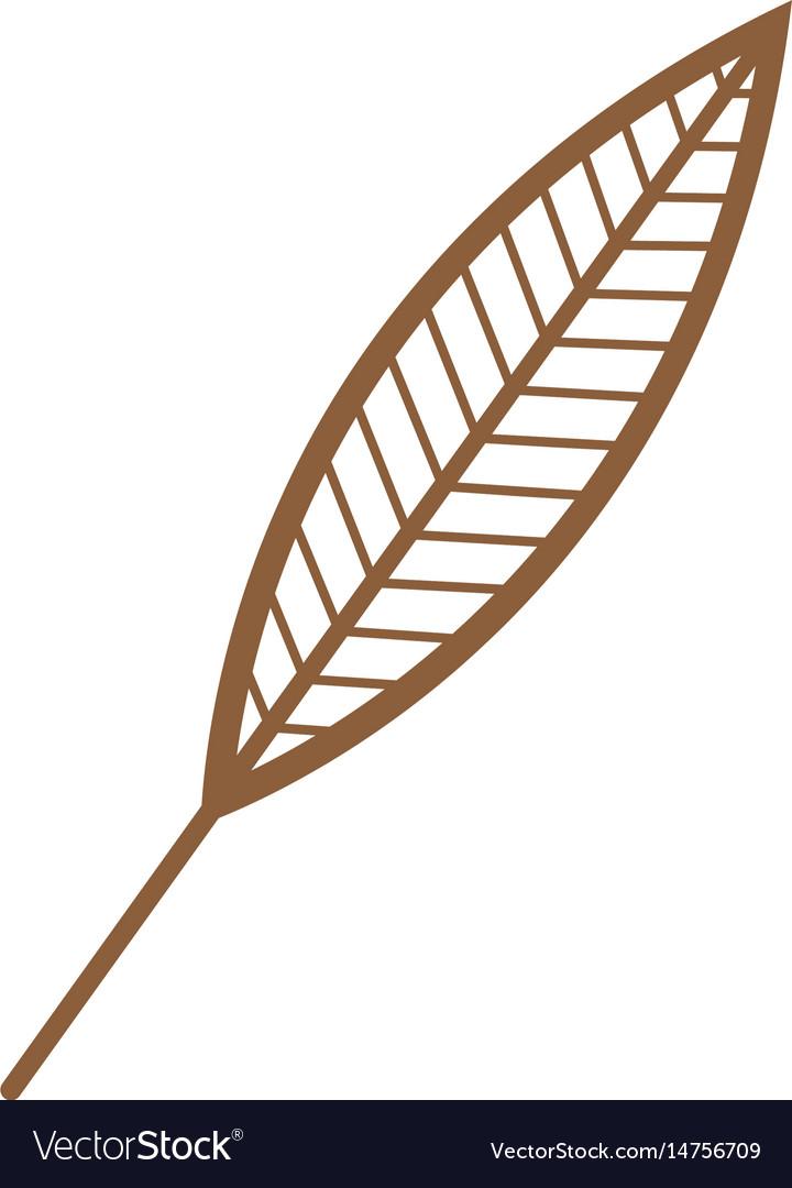 Leave natural fresh botanic foliage decorative vector image